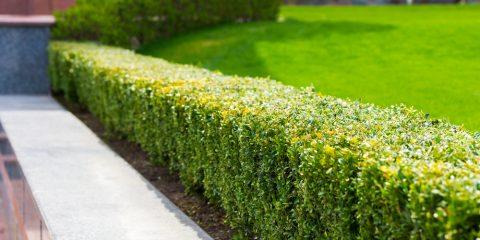 Tips voor een onderhoudsvrije tuin