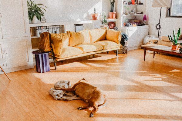 Welke ondervloer bij laminaat