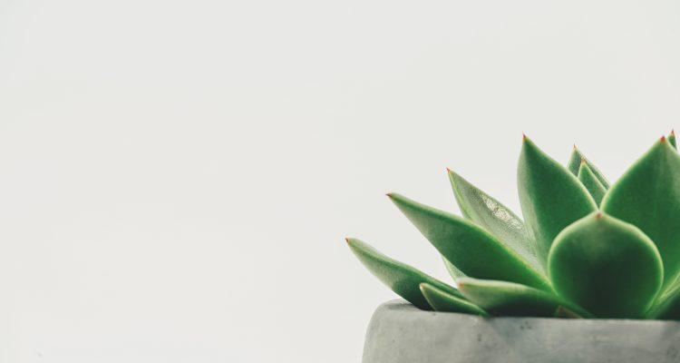 Hoe verzorg jij een kamerplant?